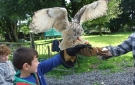 Lough Gara Falconry and Stables, Ireland.
