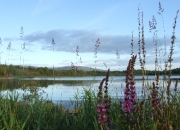 Nature Photography. Two minute stroll to little lake off Lough Allen from Luxury Camp Site