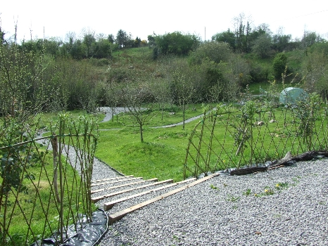 Sustainable Willow Fencing. Spring Arrives - Willow turning green