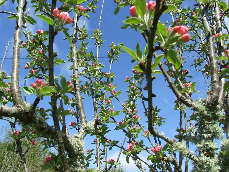 Glamping in Ireland - Pink Apple's Cider Orchard Blossom