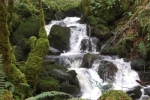 Waterfalls Cascading as we Climb..Walking In Ireland, Family Friendly Walks Near Pink Apple Orchard