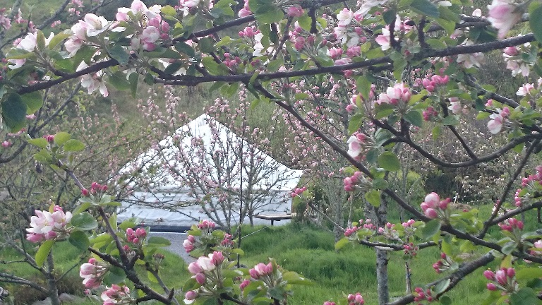 Pink Apple'sMay Blossom - Luxury Glamping site