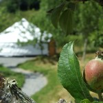 Glamping In Ireland - Stay within An Apple Cider Orchard. Family Glamp Site