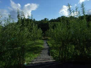 Ireland's Nature. Sustainable Willow Fencing In Ireland. Summer Growth of Willow fencing.