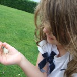 Nature in Ireland - Family Nature Trails on Holidays . Catching Butterflies