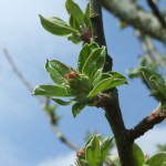 Luxury Glamping - Nature in Ireland, Leitrim, Organic  Apple Orchard Growth
