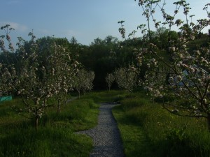 Glamping in West Ireland within Organic Apple Orchard.