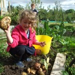 Organic Gardening In Ireland. Grow you Own Potatoes in Ireland.