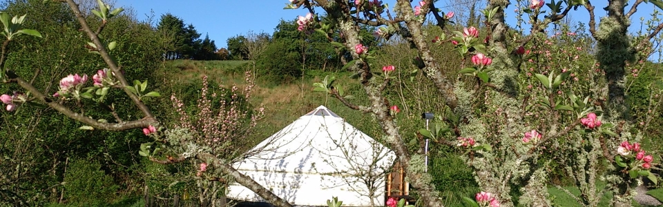 Sunrise Sanctuary Yurt – Made at luxury Family Campsite, Ireland 006