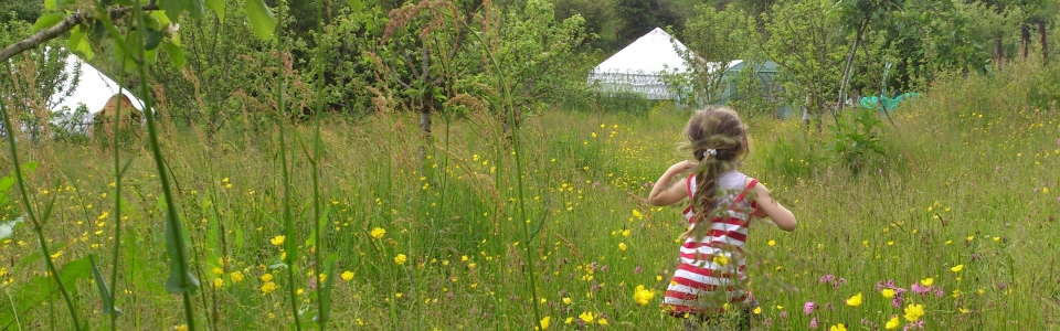 Wild Flower Meadow At Pink Apple Orchard – Yurt Glamping Holidays 001