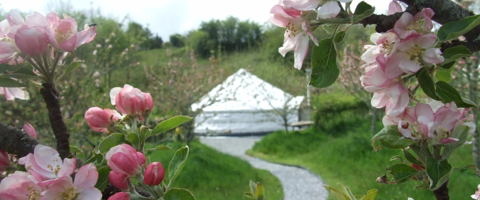 Apple Blossom, Views of Pink Apple Orchard, Glampsite, Glamping in Ireland, irelandglamping, Yurts
